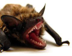 bat-exclusion